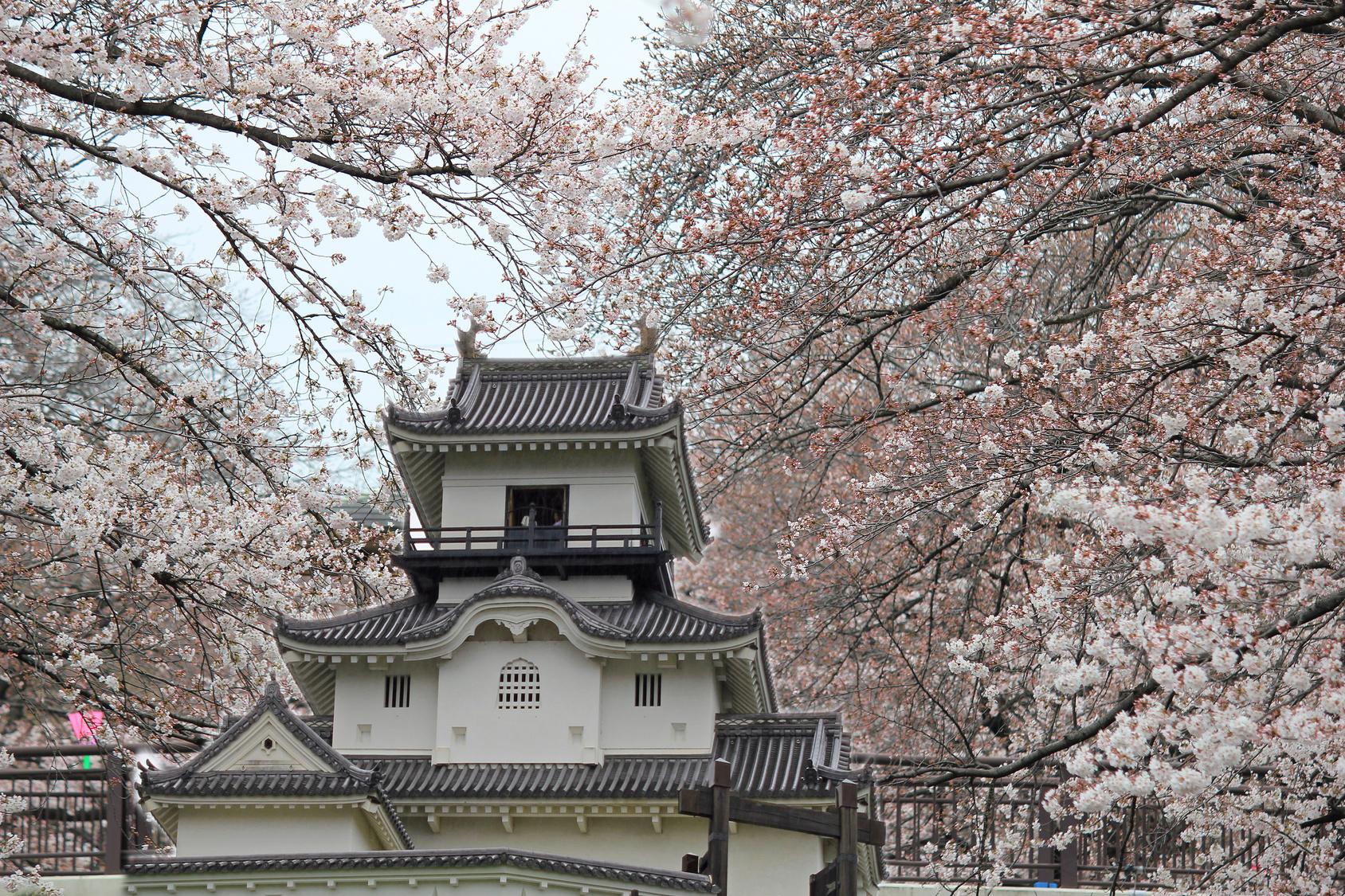 掛川城の漆喰
